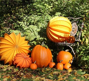 Potager en automne