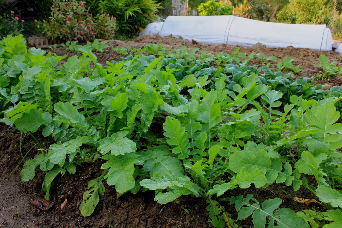 Potager En Octobre Conseils Pour Entretenir Votre Jardin I