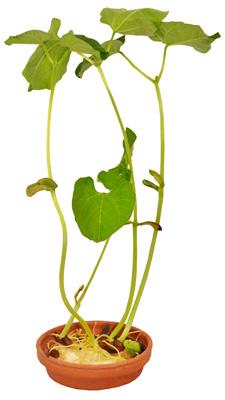 Graines en folie kit de germination enfant