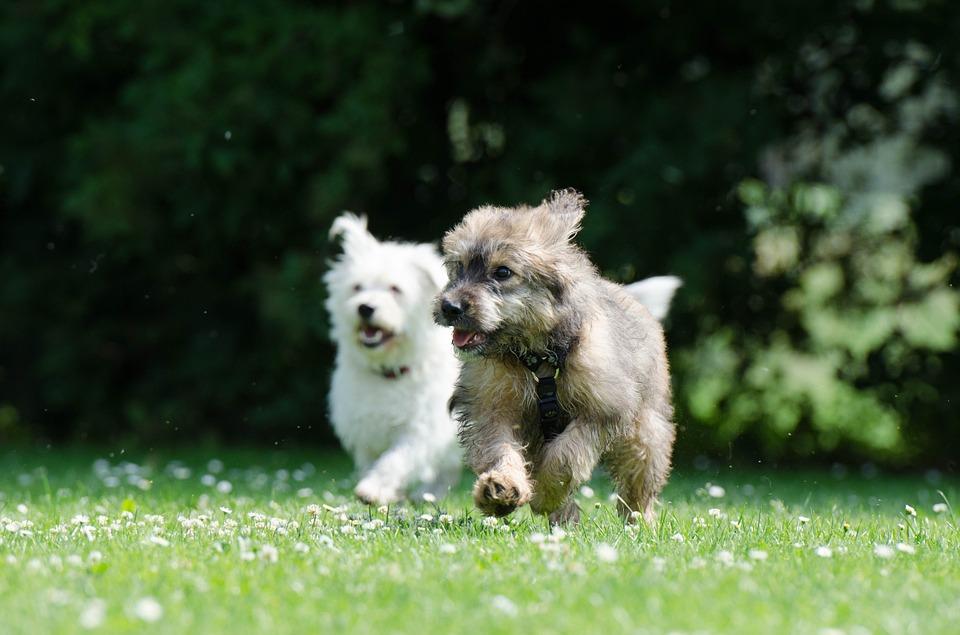 activité physique pour chien