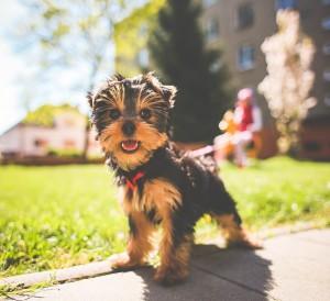 activités physique chien