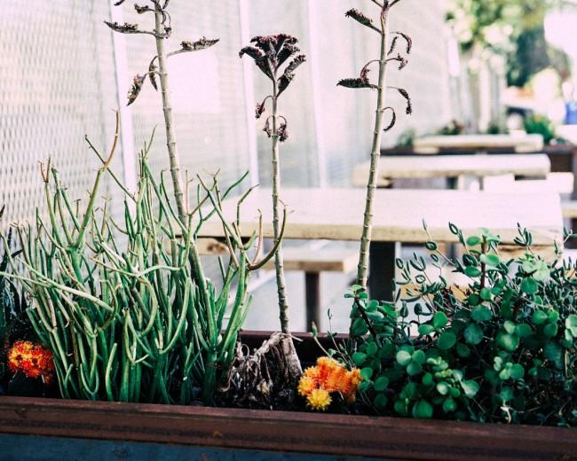 choisir sa jardinière