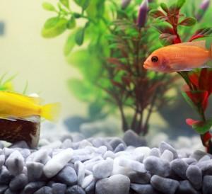 Créer l'aquarium parfait