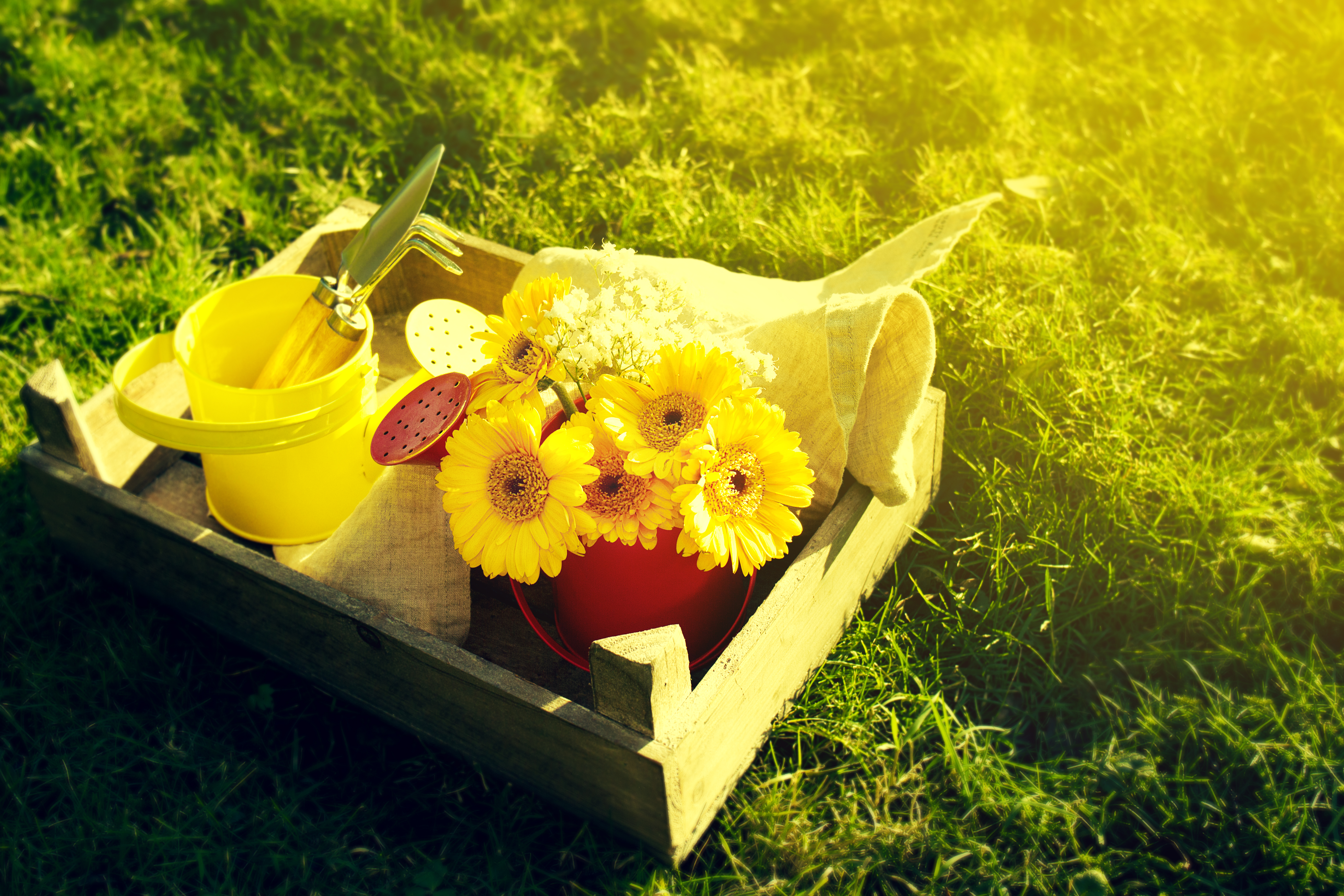 Spring or Summer Concept. Bouquet Flowers with Gardening Tools on Grass with Beautiful Sunny Light. Daylight. Horizontal with Copy Space.