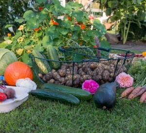 Réussir son jardin potager