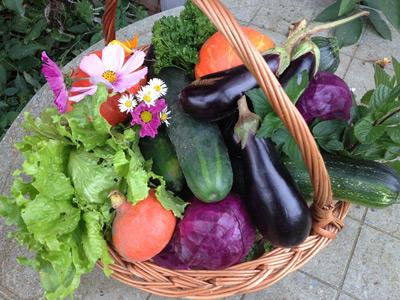 Réussir son jardin potager Choix des légumes