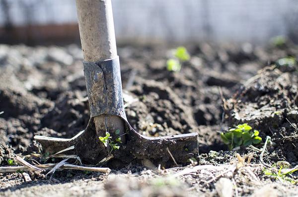 Préparation du sol pour un jardin potager réussi