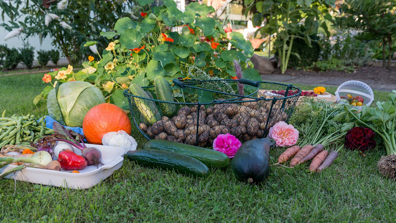 5 conseils indispensables pour r ussir son jardin potager for Blog jardin potager