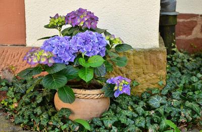 Protéger les plantes de la chaleur Jardinière