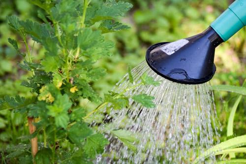 Nos astuces jardinage pour prot ger son ext rieur de la for Arrosage hibiscus exterieur