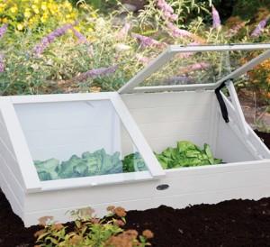 Conseils jardinage en automne Plantation sous chassis mini serre