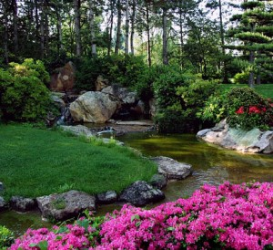 Guide pour créer un bassin de jardin