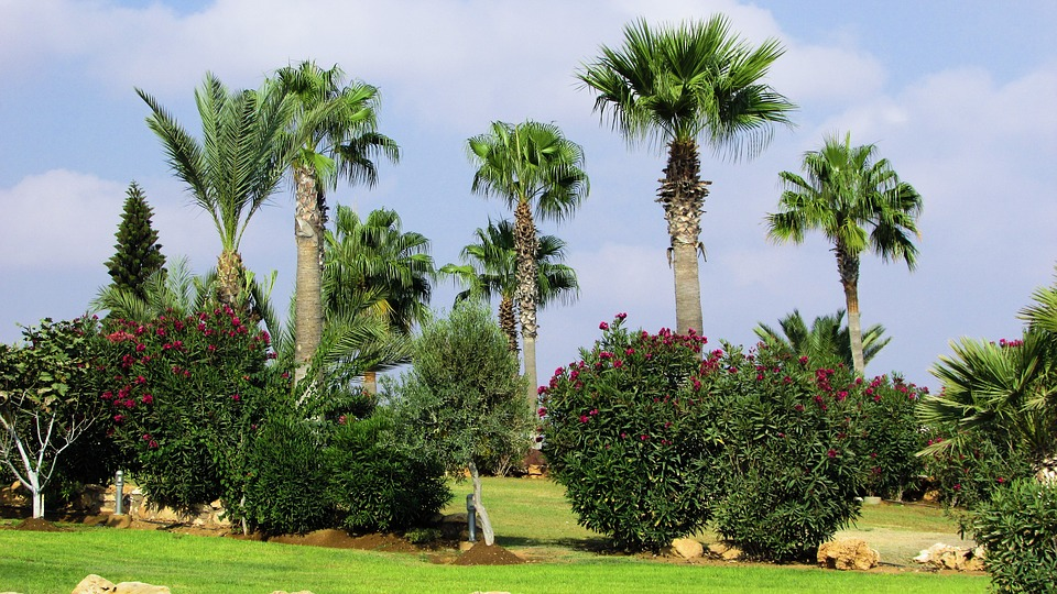 Quelles plantes pour un jardin moderne jardindeco for Plante jardin moderne