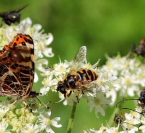 Attirer les insectes dans le jardin