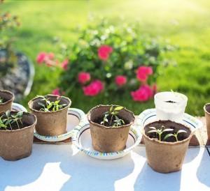 En avril au jardin, semences, entretien de printemps