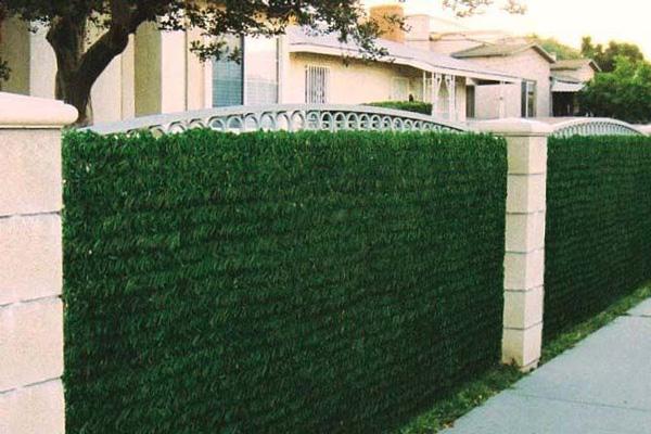 haie pour cloturer son jardin