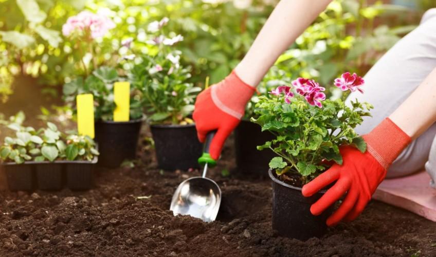 vetements-jardin-jardinage-gants-fleurs-1270x812