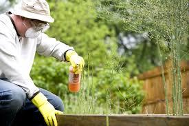utilisation pesticides responsable de la disparition des abeilles